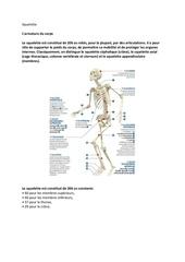 Fichier PDF squelette