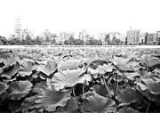 Fichier PDF cahier voyage japon 2014 lite