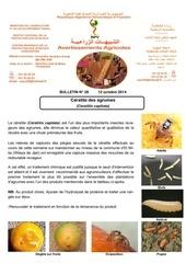 28 14 ceratite agrumes