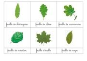 fiche classifiee feuilles d arbres