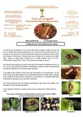 29 14 mouche de l olivier