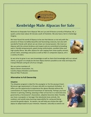 kenbridge male alpacas for sale