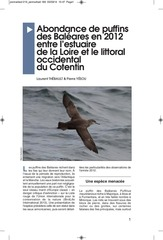 balearic shearwater in brittany 2012 update