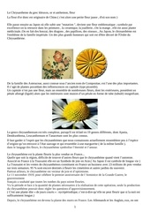 post chrysantheme