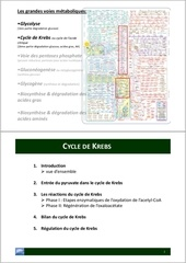 Fichier PDF cycle de krebs