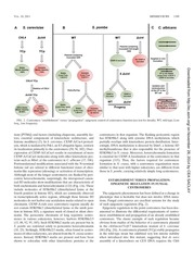 Eukaryotic Cell-2011-Roy-1384-95.pdf - page 6/12
