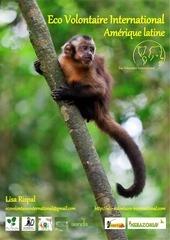 eco volontaire international dossier projet 2015