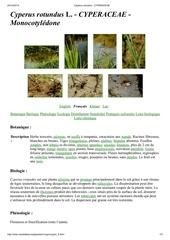 Fichier PDF cyperus rotundus cyperaceae