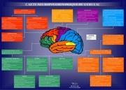carte cerveau50x36