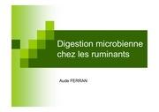 digestion microbienne chez les ruminants