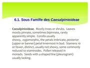 sous famille des ceasalpinoideae
