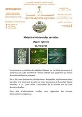 bulletin maladies foliaires