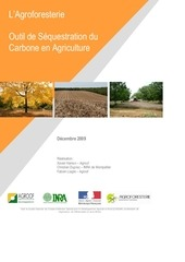 agroforesterie outil de sequestration du carbone en agriculture