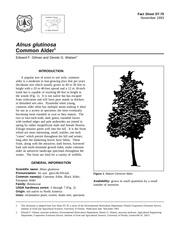 Fichier PDF alnglua
