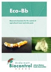 eco bb