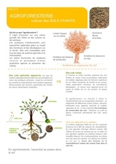 Fichier PDF fiche sol agroforesterie afaf