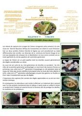 11 15 teigne de l olivier 13 05 2015