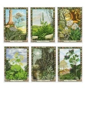 oracle des plantes druidiques