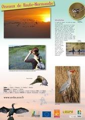 expo oiseaux