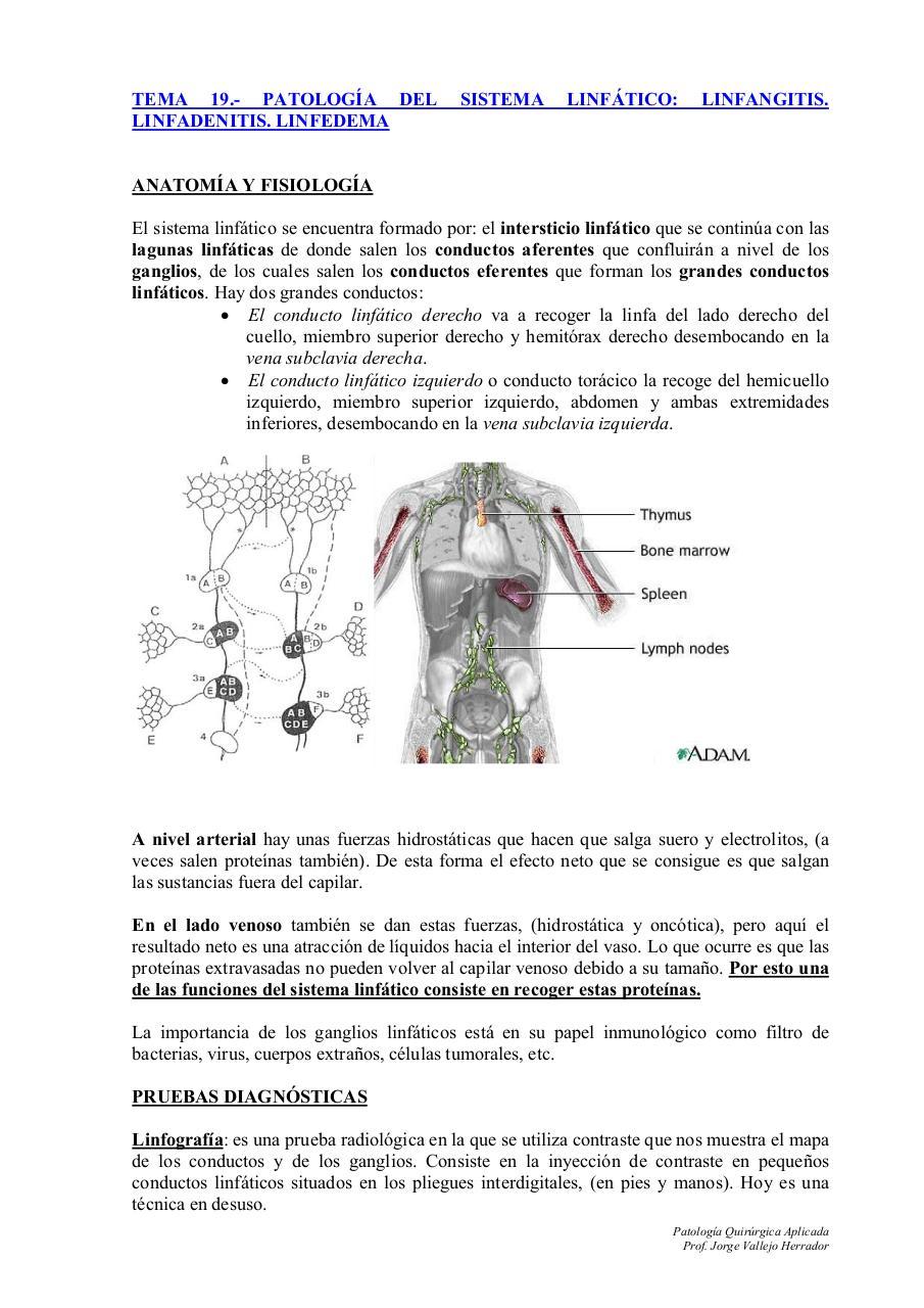 TEMA 19.PATOLOGÍA LINFÁTICA.doc par jvallejo - TEMA 19.PATOLOGÍA ...