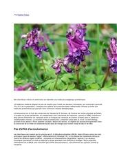Fichier PDF une plante chinoise contre la douleur