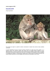 les macaques savent faire des additions