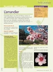 Fichier PDF plantes melliferes
