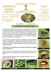 16 15 mouche de l olive