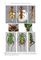 New species of cerambycidae ZK_article_6155.pdf - page 4/11