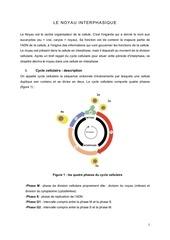 chapitre 7 le noyau interphasique copy