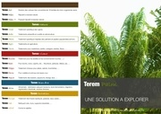 flyer terem palm v4
