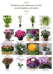 plantes ok chats