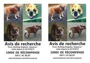Fichier PDF puce belgique a5 1