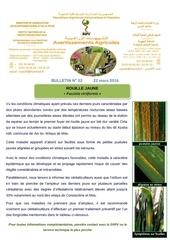 Fichier PDF 03 16 bulletin n 03 rouille jaune