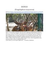 bongo resencement des publications facebook 2012 2015 1