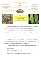botrytis sur tomate