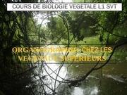 td de biologie vegetal seance 1