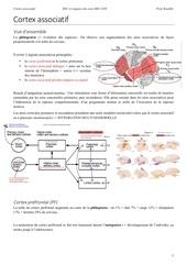 cortex associatif 1