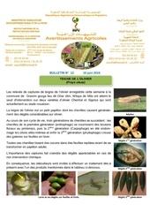 12 16 teigne de l olivier