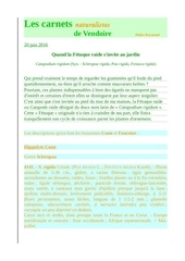 vendoire carnets nat catapodium rigidum d raymond