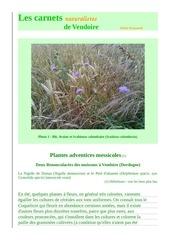 vendoire carnets nat messicoles delphinium ajacis d raymond