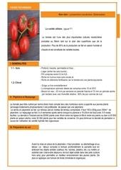 fiches techniques de la tomate