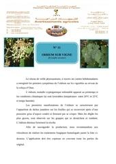 Fichier PDF 11 oidium sur vigne