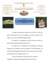 Fichier PDF 13 teigne de l olivier