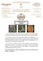 cochenille des agrumes