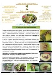 13 16 mouche de l olive fin