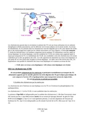 L2 – Nutrition – N°6 – Groupe 32.pdf - page 5/22