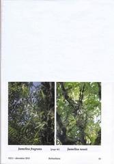 identite de j fragrans j rossii 12 2010 p bernet