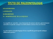 td paleontologie gasteropode 2 1