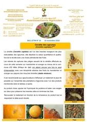 15 16 ceratite des agrumes 2eme avis